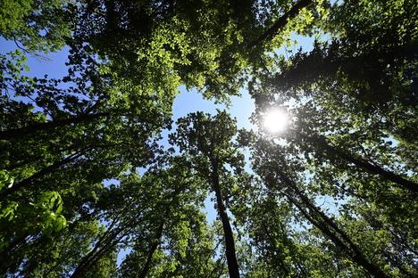 Sachsen: Waldbrandgefahr steigt