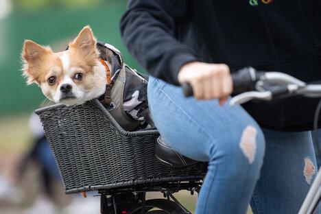 Corona: Meldepflicht für Haustiere kommt