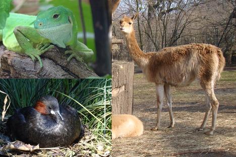 Familie und Kinder: Wer wird Tier des Monats Mai?