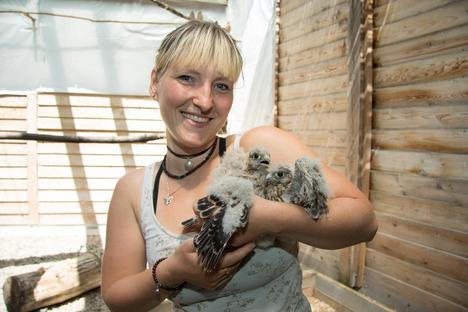 Erste Hilfe für Dresdner Pechvögel