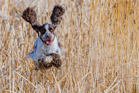 Leben und Stil: Die neue Liebe zum Hund