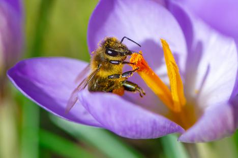 Bauen und Wohnen: Im Garten ein Zuhause für Wildbienen