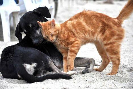 Hund und Katze auf Tinder