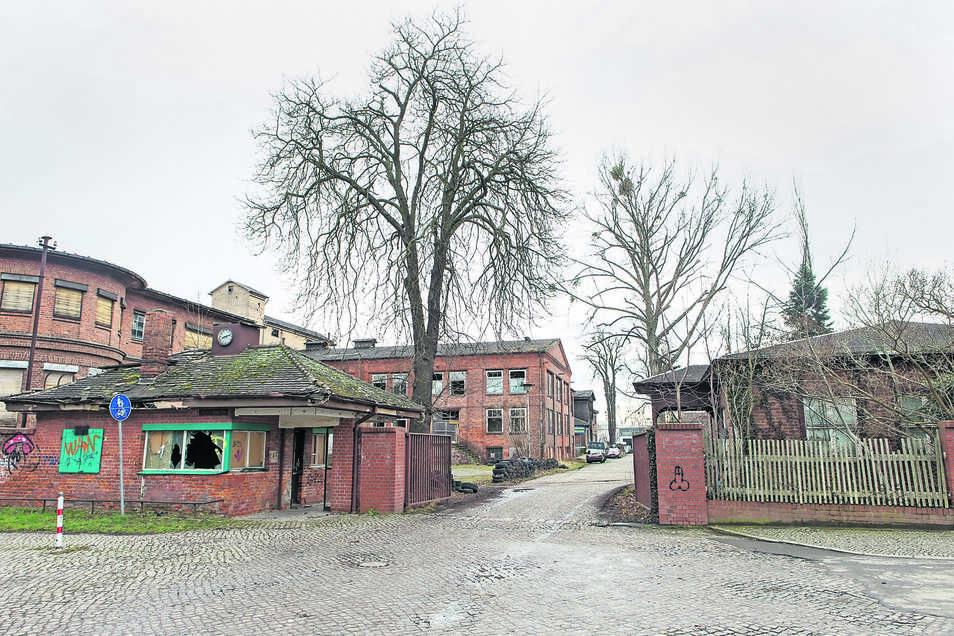 Das Gelände der ehemaligen Maschinenfabrik in Heidenau ist schon von Weitem ein Graus.