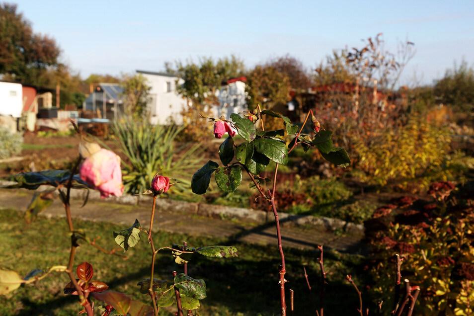 Kleingärten sind in der Corona-Krise zur willkommenen Zuflucht geworden.