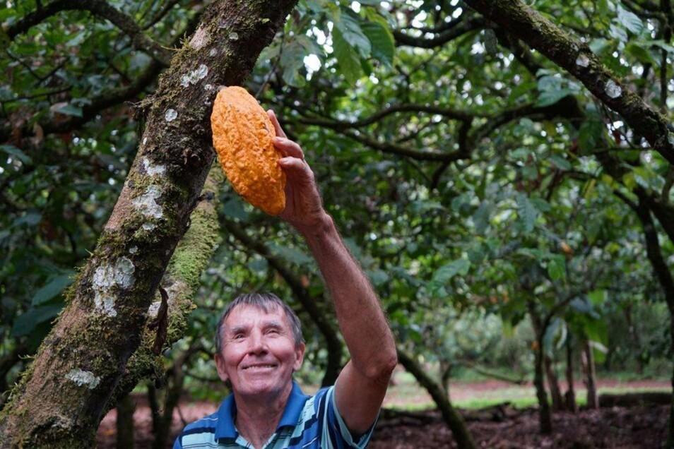 Die rötliche Frucht eines Kakaobaums ist Grundlage für die positive Entwicklung am Amazonas.