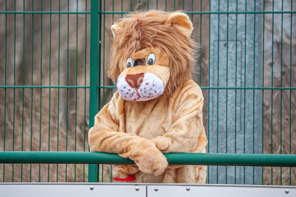 Auch der Löwe, das Maskottchen des Großenhainer Fußballvereins, freut sich, dass endlich wieder gespielt wird.