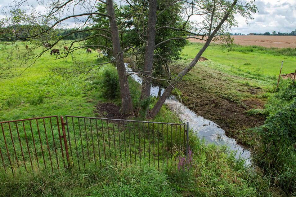 Der Elligastbach bei Stroga wird renaturiert. Das dient auch dem Hochwasserschutz.