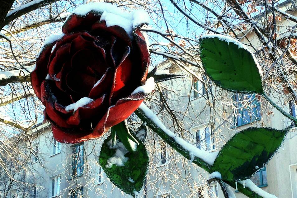 In der Qualifikationsrunde hatte die Rose am Rosarium WK VI (Bautzener Allee) mit 14 Vorschlägen die Blütenblattspitze vorn. Im Finale war's Platz 3 (8 % der Stimmen) – das sollte reichen, um per Bürgerhaushalt saniert zu werden.