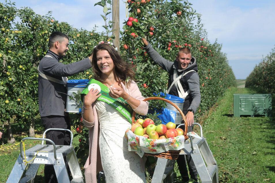 Dort hängen die Zweige voll mit Gala-Äpfeln, doch insgesamt ist die Ernte schwach: Sachsens Blütenkönigin Elisabeth hat mit ukrainischen Pflückern die Saison eröffnet.