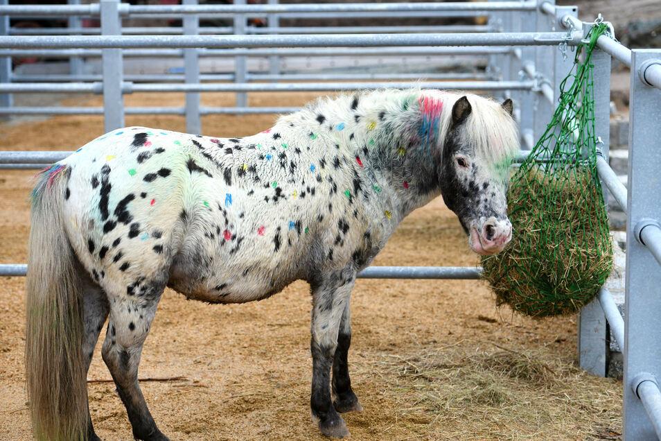 Dieses Pony begrüßte die Gäste mit bunten Farbtupfern.