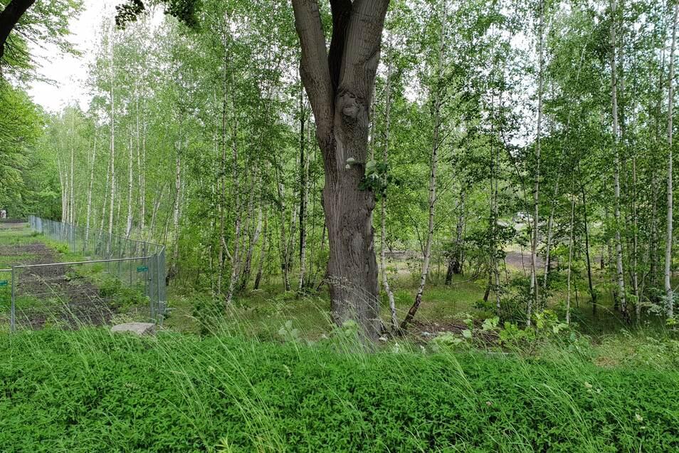 Den Exerzierplatz hat sich die Natur zurückgeholt. Ein großer Teil des ehemaligen Armeegeländes ist eingezäumt.