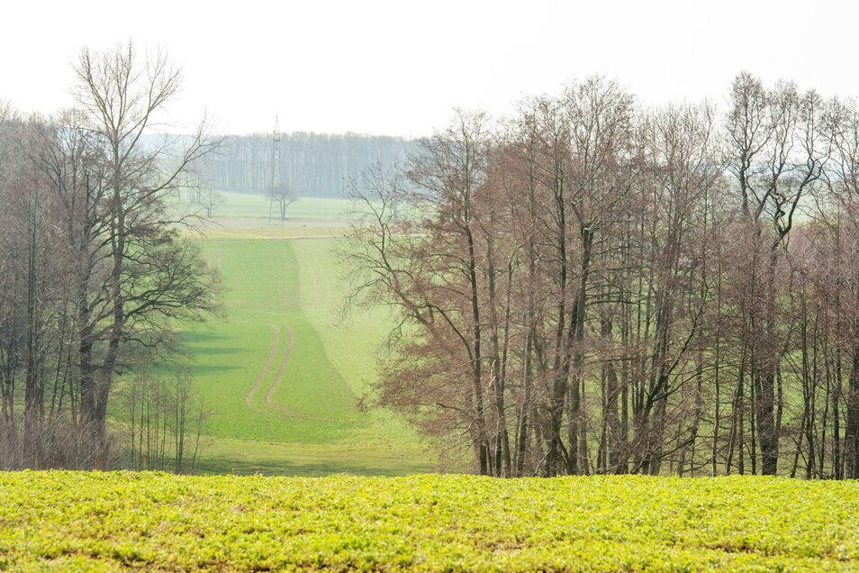 Das Waldgebiet Struth bei Wilsdruff wurde vergrößert. Über 4.200 Bäume wurden hier gepflanzt.