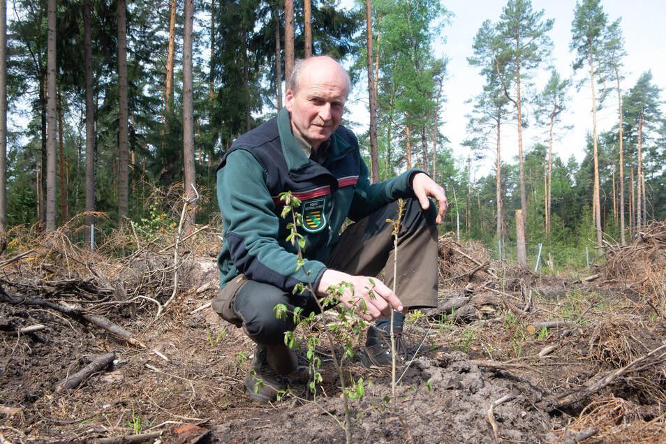 In der neu gepflanzten Schonung an der Alten Acht zeigt Forstdirektor Heiko Müller Hainbuche und Eiche.