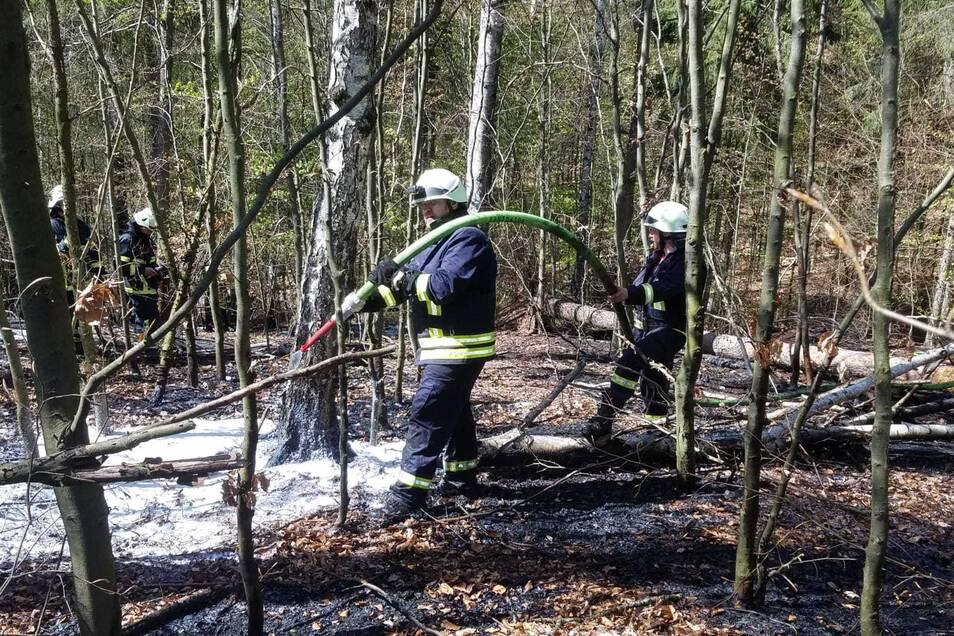 Mehrere Kameraden aus vier verschiedenen Wehren waren am Montag im Langenauer Wald im Einsatz.