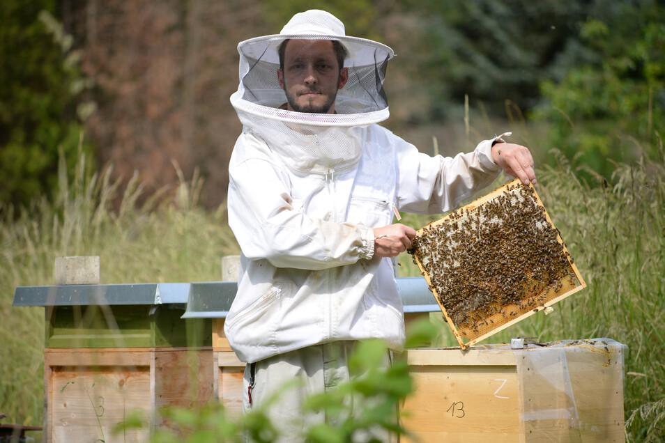Steffen Braun ist Imker in Nieder Seifersdorf. Seit fünf Jahren betreibt der IT-Techniker das Hobby und besitzt 14 Bienenvölker.