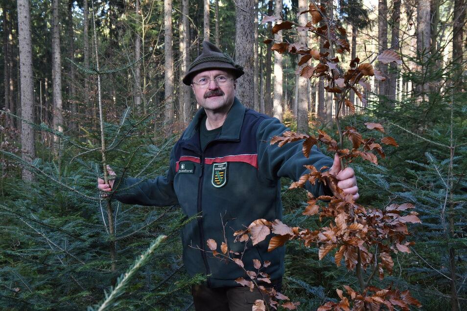 Ihm gefällt sein Wald schon viel besser: Bernd Kaiser, der Revierförster vom Bielatal, freut sich über junge Buchen und Weißtannen.