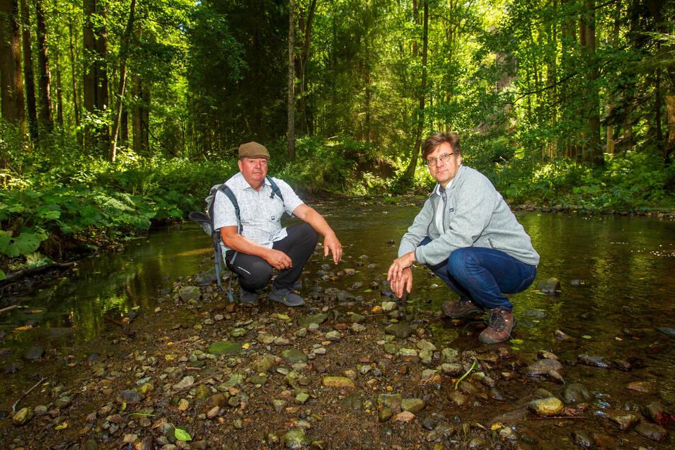 Die Idee: Trittsteine in der Polenz könnten eine Flussquerung ermöglichen. Die passende Stelle haben Mathias Klimmer (li.)und Rolf Böhm schon gefunden.