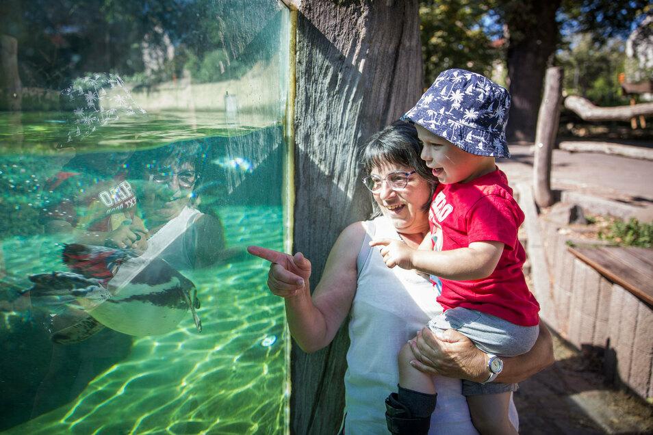 Die Pinguine sind die Lieblingstiere von Matti. Regelmäßig unternimmt Ria Scheller Oma-Enkel-Ausflüge mit dem Zweijährigen.