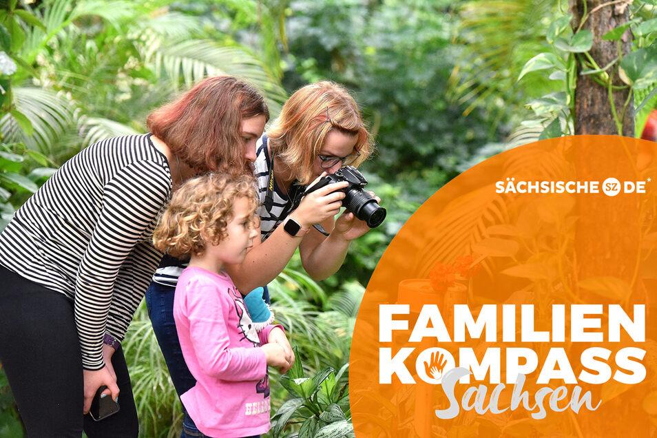 Besucher fotografieren die Schmetterlinge an den Futterstellen im Schmetterlingshaus Jonsdorf. Honorarfrei für Produkte von Sächsische.de und Sächsischer Zeitung