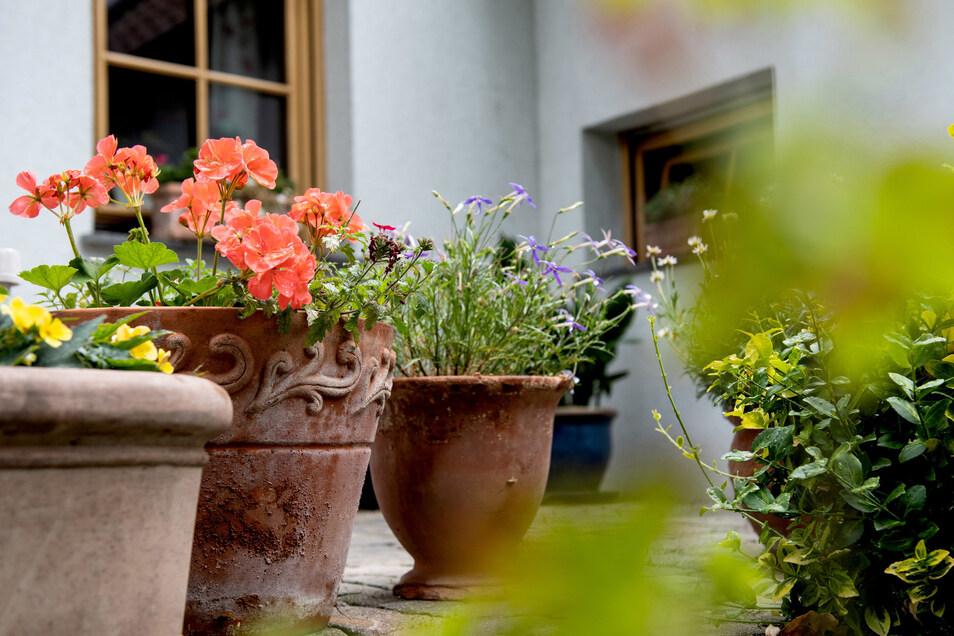 Frostharte Steingut- und Tontöpfe sind zwar schwer, sorgen aber für mediterranes Flair auf Balkon und Terrasse.