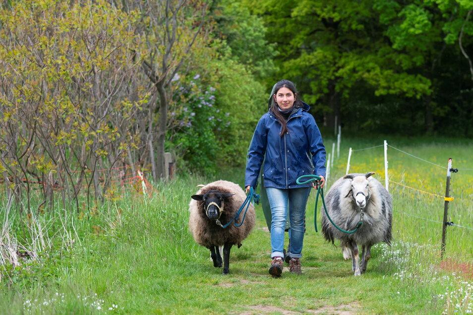 """Die Schulbank hat Isabel Schöne gegen viel Bewegung im Freien eingetauscht. Sie macht ein Freiwilliges Ökologisches Jahr auf der Kinder- und Jugendfarm """"Spielwiese"""" in Dresden."""