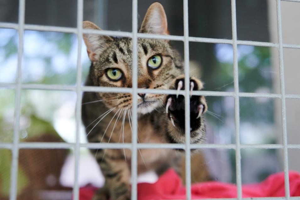 Eine Katze schaut durch die Gitterstäbe am Katzenzwinger im Tierheim Berlin.