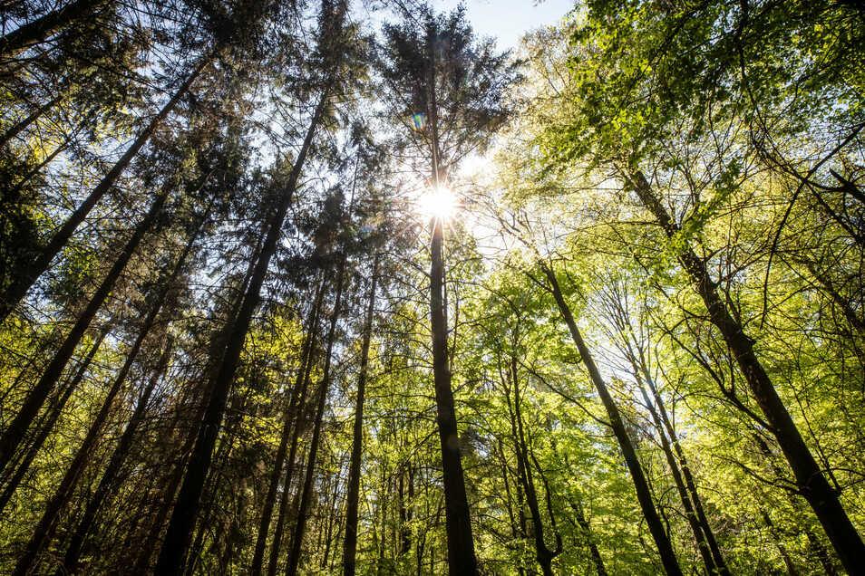 Im Flächennutzungsplan der Stadt Meißen sind fünf Standorte für die Waldmehrung vorgesehen, die neben der Erzeugung von Nutzholz vorrangig der ökologischen Umweltverbesserung dienen sollen.