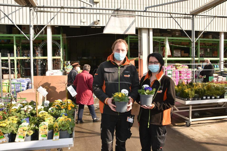 Verkäuferin Stefanie Genzel und Service-Mitarbeiter Eric Retschke erlebten gestern im Globus-Baumarkt Hoyerswerda einen echten Kundenansturm. Viele interessierten sich für die Frühjahrsblüher, hier zum Beispiel Rosenprimeln.