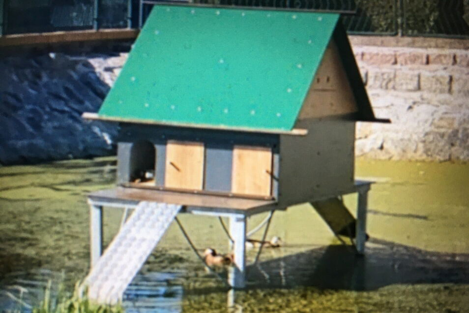 Das neue Entenhaus von Schönborn.