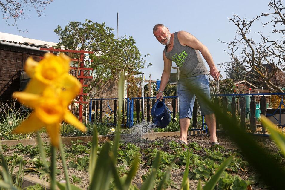 Vor der Ernte kommt das Gießen: Michael Lehmann ist in der Riesaer Gartensparte Körnerstraße Wegewart für Weg 4 und 5.