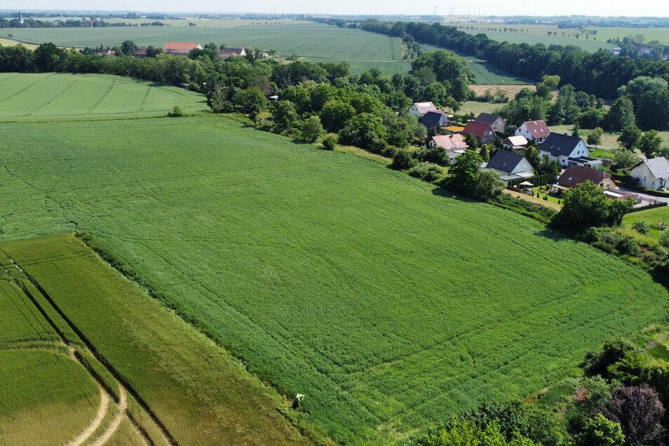So sieht das geplante Areal für die Gärtnerei von oben aus. Rechts liegt das Wohngebiet Nickritz, oben links ist Gostewitz zu erkennen.