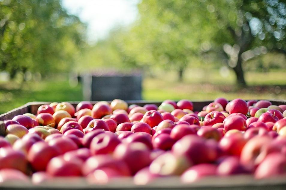 Das beste aus heimischen Früchten vereinen die umweltbewussten Erfrischungsgetränke der Oppacher Mineralquellen.