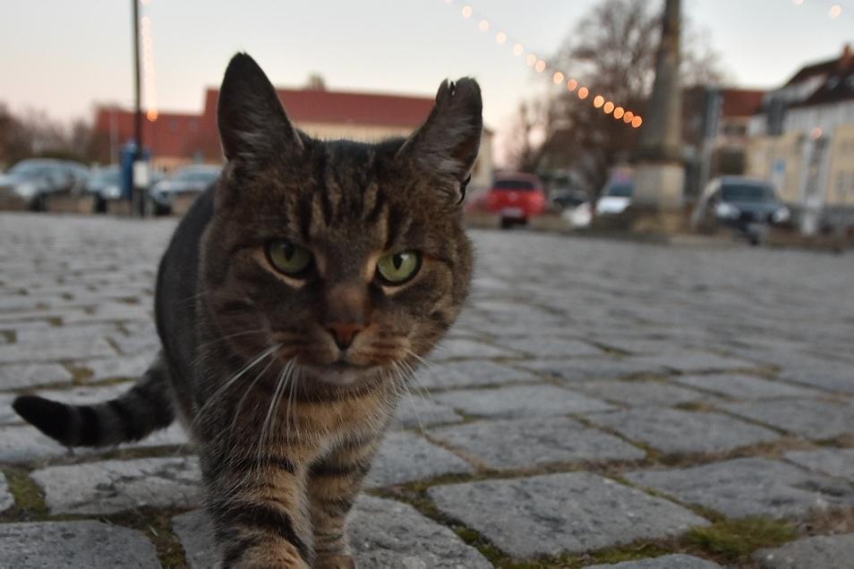 Der Markt und die umliegenden Straßen sind das Revier von Katze Miezi. Daher ist sie auch nur als Marktkatze bekannt.