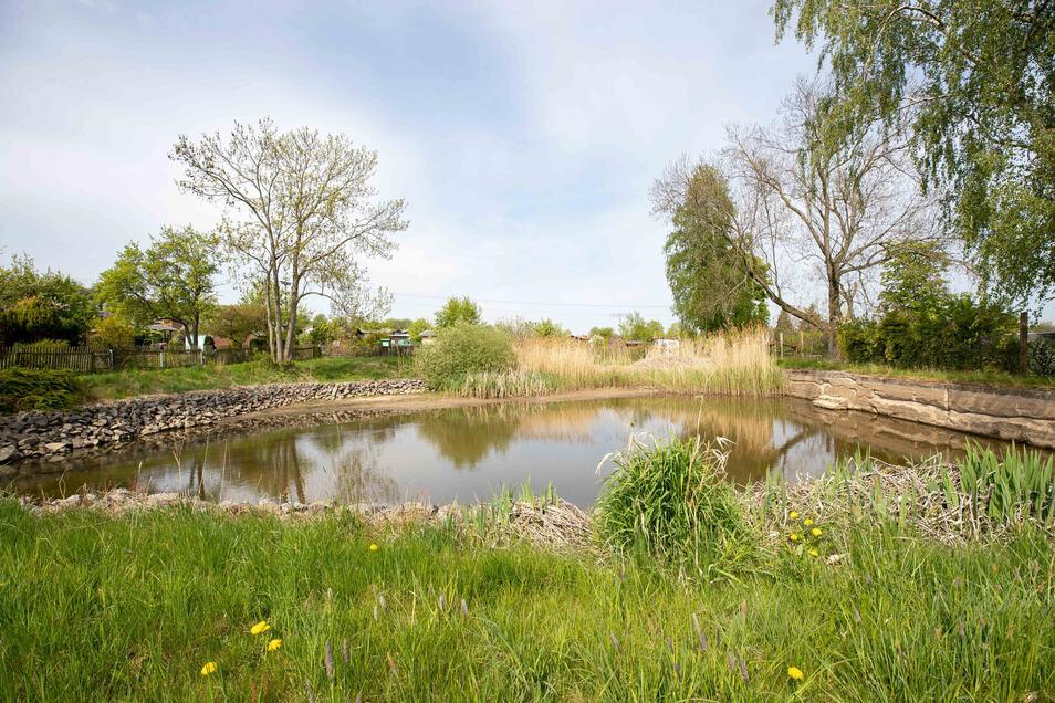 Der undichte Teich an der Schillerstraße in Neustadt sorgt für Ärger.