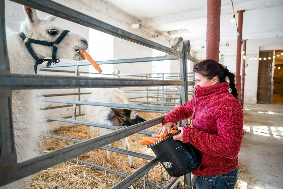 Jessica Köllner versorgt ein Pony im provisorischen Winterquartier ihres kleinen Familienzirkus'.
