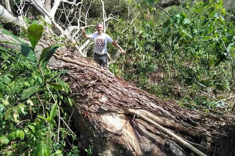 Auf der philippinischen Insel Leyte ist Amin zur Stelle, wenn ein Urwaldriese einem Taifun zum Opfer gefallen ist.