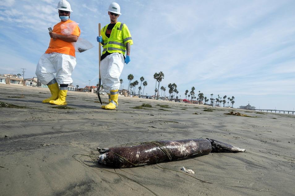 Arbeiter in Schutzanzügen gehen an einem Strand in Newport Beach, Kalifornien, vorbei, an dem tote Meerestiere nach einer Ölpest angespült wurden.