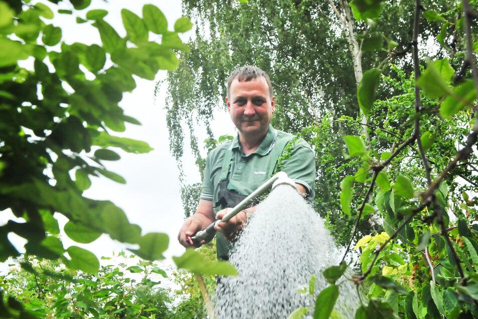 Auch in der Priestewitzer Baumschule herrscht Trockenheit. Die Bewässerung, so Gärtnermeister Hans-Jörg Winkler, ist deshalb das A und O.