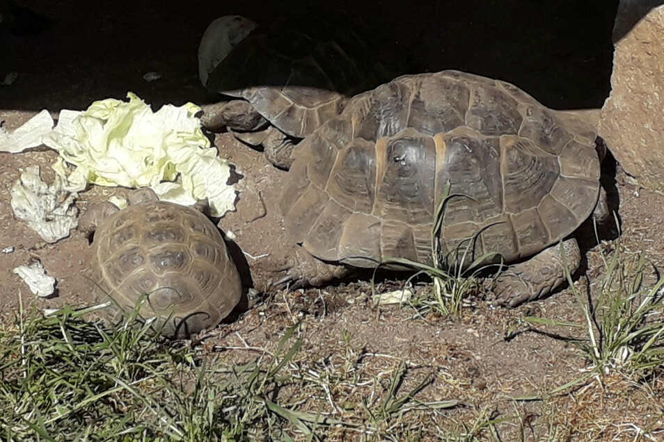 Auch Schildkröten besitzt Winfried Müller in seinem Garten.