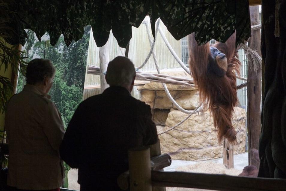 """Die Gehege im Orang-Utan-Haus seien kleiner als Fachleute empfehlen, es handele sich um """"bunkerartige Abteile"""", findet Great Ape Project."""