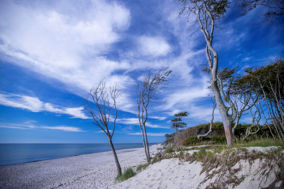 Windschiefe Bäume stehen in Prerow direkt an der Küste. In Mecklenburg-Vorpommern wir der Tourismus für Gäste aus anderen Bundesländern ab dem 14. Juni geöffnet.