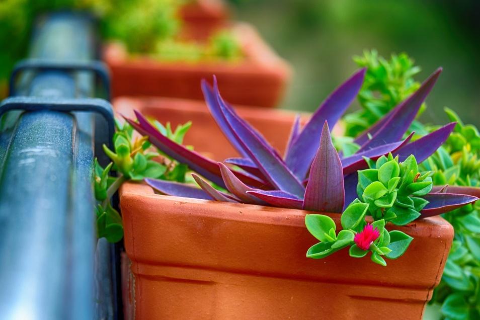 Manche Pflanze verkümmert, weil sie alleine ist. Daher sollten Gefäße richtig bepflanzt werden.