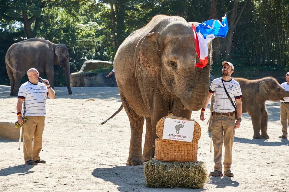 Die Hamburger Elefantenkuh Yashoda wedelt mit der französischen Fahne, die sie zuvor aus einem Weidenkorb gezogen hatte. Yashoda sollte den Ausgang des ersten EM-Spiels der deutschen Nationalmannschaft gegen Frankreich vorhersagen.