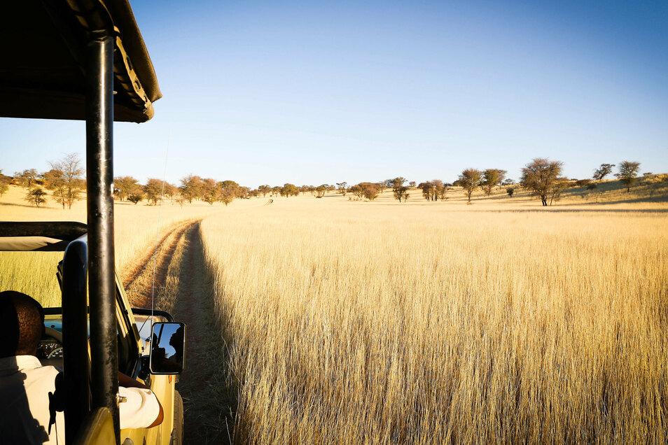 Lust auf Safari in der Kalahari: Namibia ist eines der Länder in Afrika, die derzeit schon wieder von deutschen Reiseveranstaltern angeboten werden.