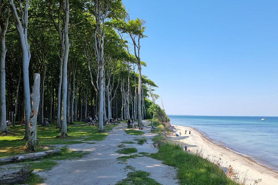 Schauspiel der Natur: der Gespensterwald von Nienhagen. Die Küste bricht hier Jahr für Jahr ein Stück weiter ab.