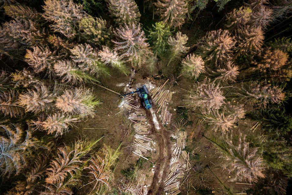 """""""Der Wald stirbt"""": Der Fotograf Dietmar Thomas gewinnt mit dieser Aufnahme des Westewitzer Forstes in der Kategorie """"Lokalfoto des Jahres""""."""