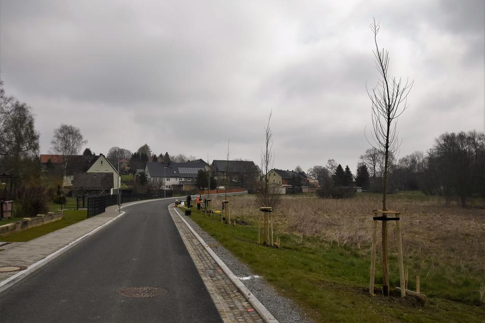 Die Ortsdurchfahrt durch Seeligstadt wird wieder grüner.