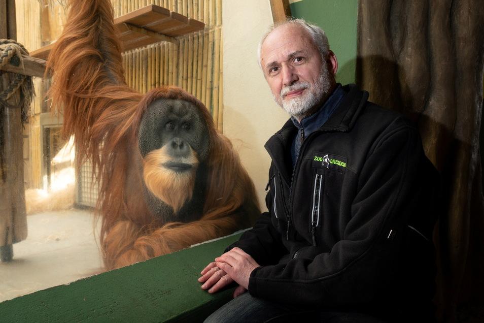 Männchen Toni kam vor 28 Jahren nach Dresden und gehört nicht nur für Wolfgang Ludwig zu den eindrucksvollsten Persönlichkeiten im Zoo.