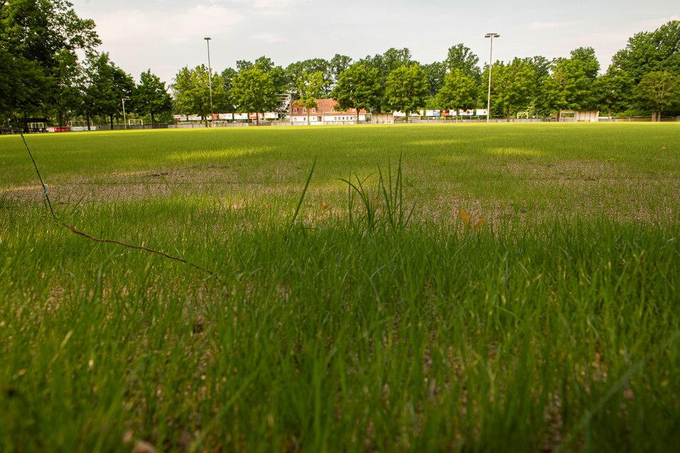 """Vor dem Winter noch """"rote Erde"""", wächst jetzt auf dem ehemaligen Hartplatz auf der Jahnkampfbahn saftiges Grün."""